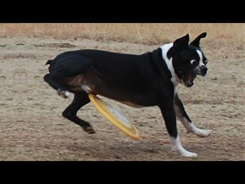 Top 100 Funniest Dogs Reaction Videos 🤣🤣 TRY NOT TO LAUGH