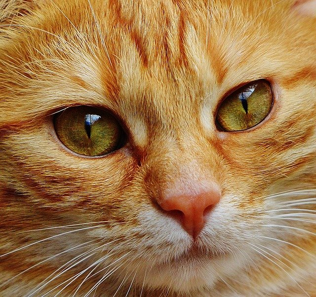 Cat Advice Every Cat Owner Should Read