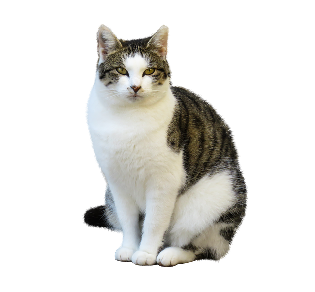 Ensure You Cat Lives A Long And Happy Life With These Top Tips