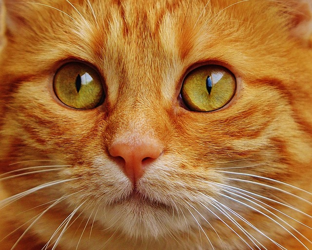 The Best Advice For Keeping Your Cat Happy