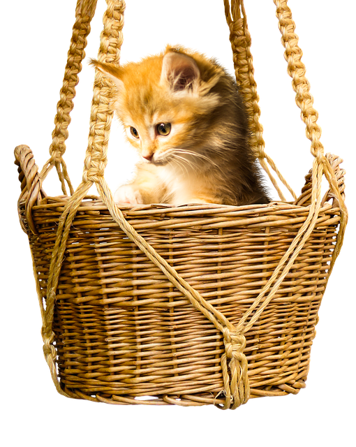 You Can Get Good Information And Learn More About Cats In The Article Below