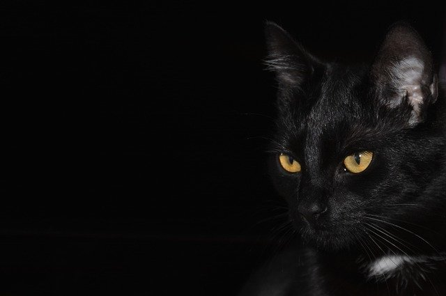 Learn A Few Things Here About Looking After Cats