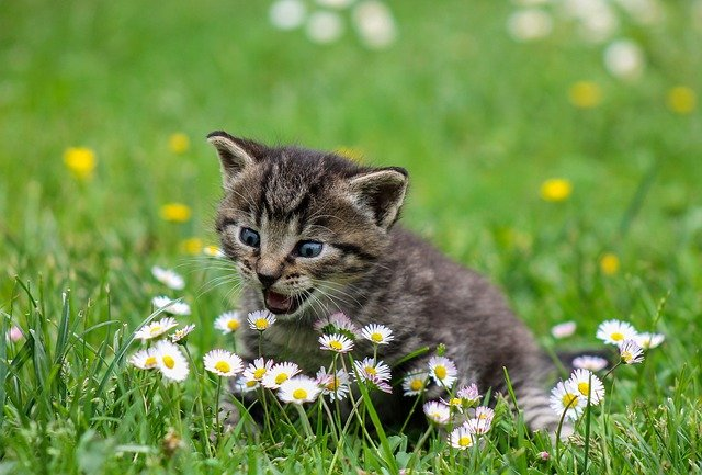Look At These Great Tips About Cats