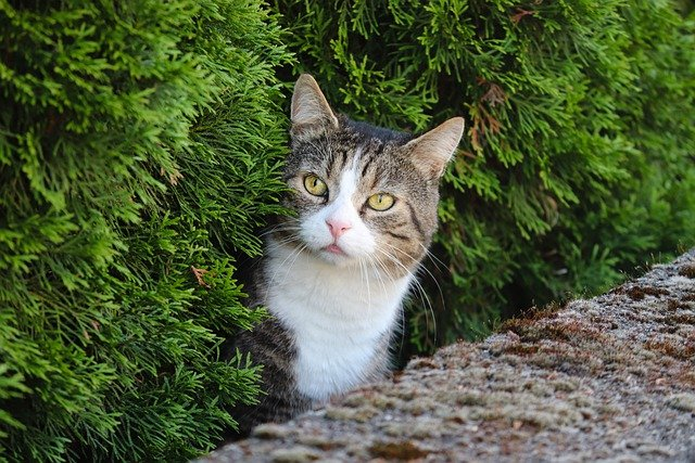 New Cat In The House? These Tips Can Help!
