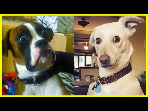 Best of FUNNY DOG videos will Fill the black hole in your heart