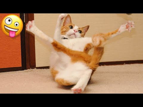 🤣 Funniest 😻 Cats And 🐶 Dogs – Cute And Funny Animal Videos 😇