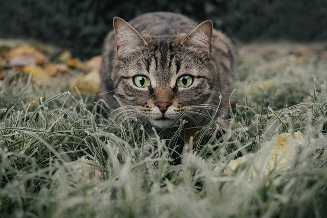 Care Tips For New And Old Cat Owners