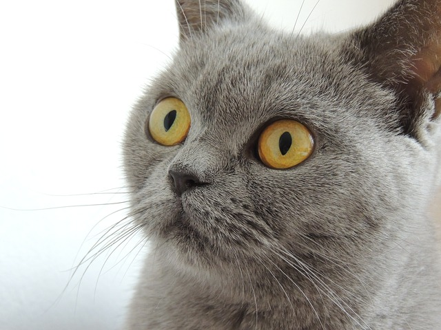 Cat Care Advice To Help You With Your Pet