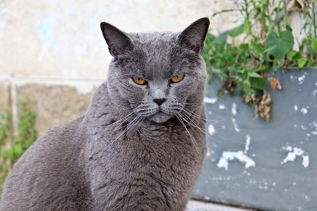 Check Out These Wonder Tips About Cats In The Article Below