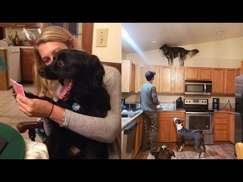 I think these dogs are broken! 😂LAUGH at FUNNY DOGS compilation🤣