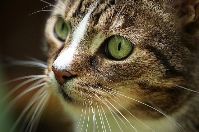 Expert Advice About Cats That Can Really Help You!