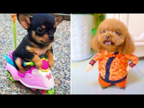 Baby Dogs 🔴 Cute and Funny Dog Videos Compilation #3 | 30 Minutes of Funny Puppy Videos 2021
