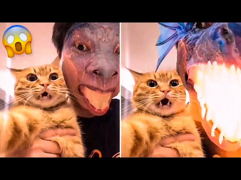 Funny Dogs And Cats Videos 🤣 –  Cute Cats 😹 And Dogs 🐶  Reactions