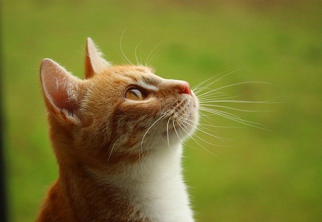 Simple Tips And Practical Advice For Caring For Your Cat