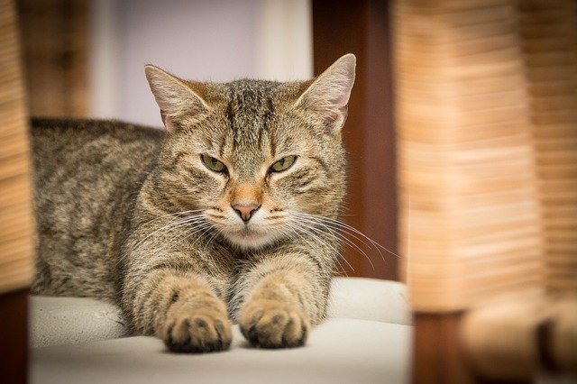 If You're Into Cats This Article Is For You