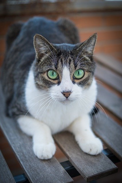 Need Help With Your Kitty? Try These Top Tips!