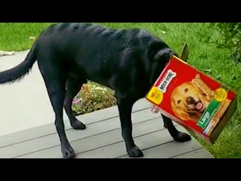 Dog Gets Caught   Funny Pet Videos