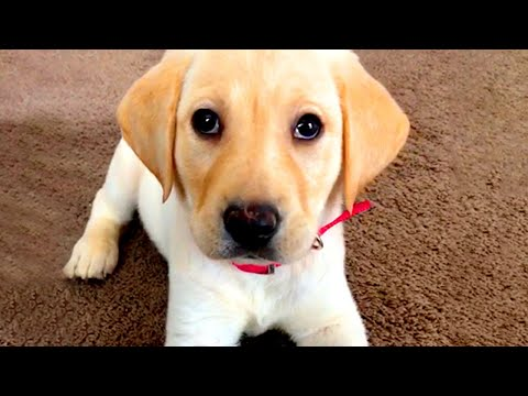 Cute Silly Dog Bloopers   Funny Pet Videos