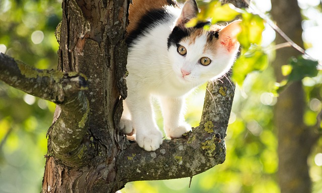 Simple Cat Tips That Any Novice Can Understand