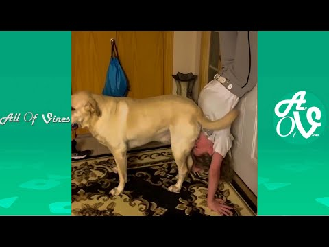 Try Not To Laugh Watching Funny Animal Videos | Funny and Silly Animals 2021 #7