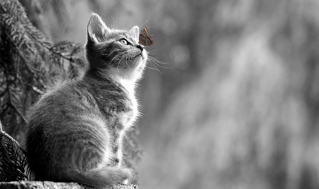 Think Like A Cat To Make Your Pet Happy