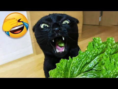 Funny Cat Videos That Will Smile You Laugh All Day Long 😂😹