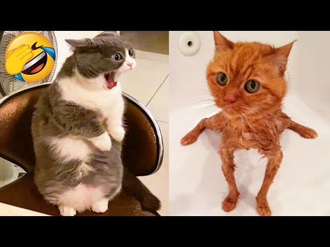 Cute Cats And Dogs That Will Make You Laugh 🥰 – Funny Animals Compilation #4 😂