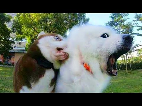 Funny Dogs Videos That Will Make You Laugh All Day Long 😹Funniest Pets Videos