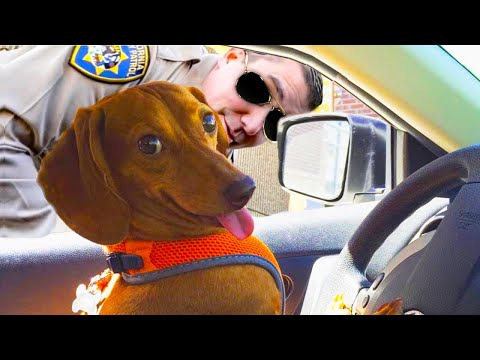 ULTIMATE Funny Dog Videos   TRY NOT TO LAUGH FUNNY VIDEOS