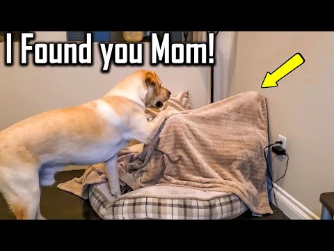 FUNNIEST  DOG – You'll laugh until you're FART with these FUNNY DOG Videos