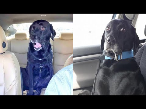Dogs Realized They Were Going To The Vet ,Funniest Reactions  – TRY NOT TO LAUGH 🤣🤣🤣
