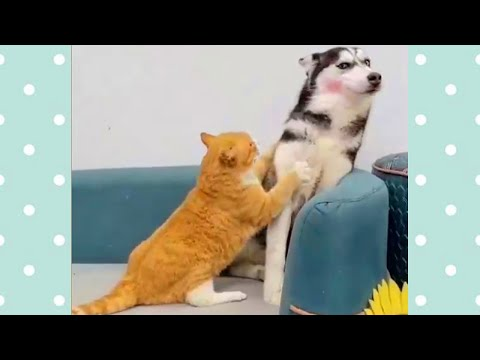 Household pets! 😺 Compilation of funny videos with CATS and DOGS for a good mood!