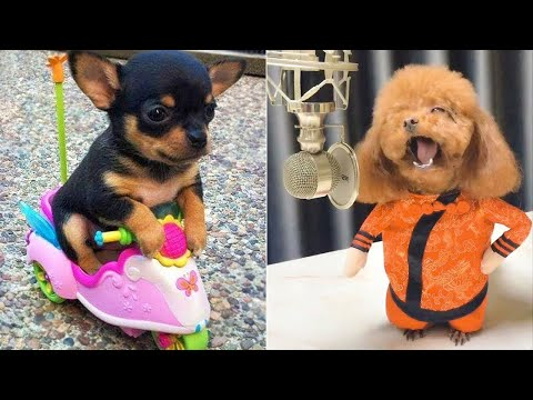 Baby Dogs 🔴 Cute and Funny Dog Videos Compilation #7   30 Minutes of Funny Puppy Videos 2021