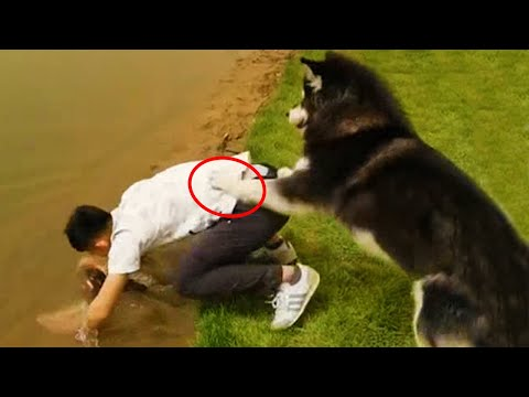 OLD DOG NEW FAILS   Dogs Failing Compilation   FUNNY DOG