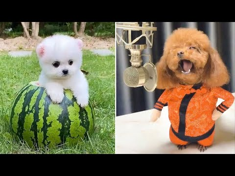 Baby Dogs 🔴 Cute and Funny Dog Videos Compilation #8 | 30 Minutes of Funny Puppy Videos 2021