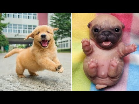 Baby Dogs 🔴 Cute and Funny Dog Videos Compilation #10   30 Minutes of Funny Puppy Videos 2021