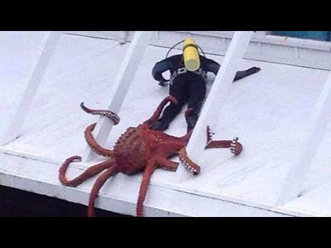 You are luckier than these people! Funny Animals Trolling Human TRY NOT TO LAUGH