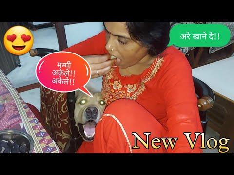Labrador dog shy funny vlog ever || funny dog video || SourShy