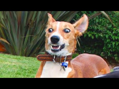 Funniest Animals – Best Of The 2021 Funny Animal Videos 🤣