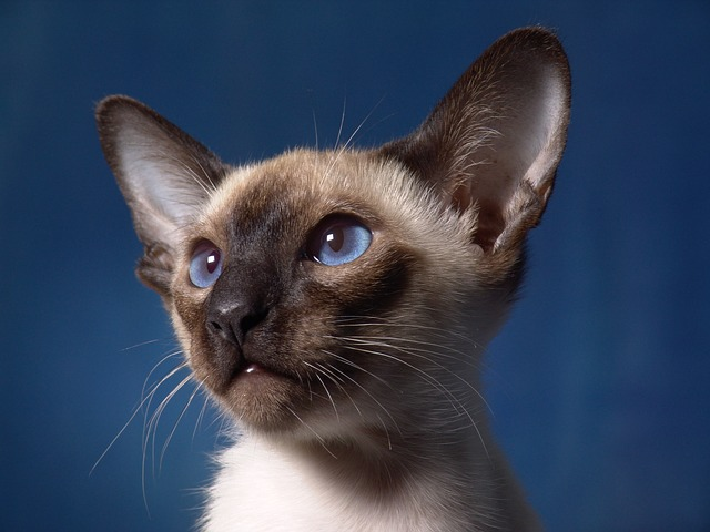 Essential Cat Care Tips To Make You A Better Human