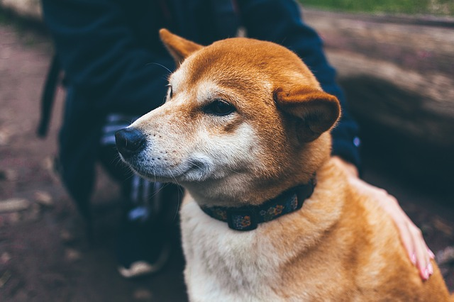 Great Ideas To Help You With Your Dog Training