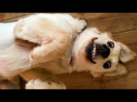 Funny DOG Videos that Make Me Burst Into Tears Laughing 🤣 🐶