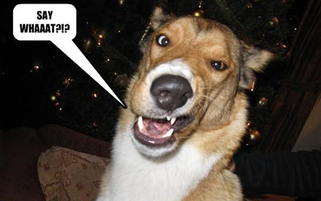 IMPOSSIBLE TO HOLD YOUR LAUGH  – Best FUNNY DOG Videos