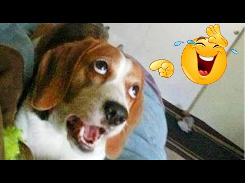 FUNNY DOG Videos That Will Cure Your Bad Day – 🤣 LAUGH at FUNNY DOGS compilation