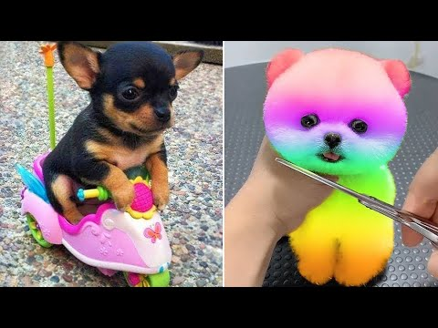 Baby Dogs 🔴 Cute and Funny Dog Videos Compilation #16 | 30 Minutes of Funny Puppy Videos 2021