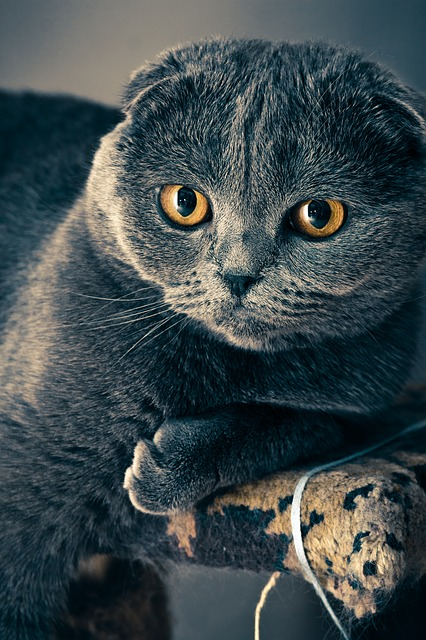 Your Cat And You, A Guide For Pet Parents.